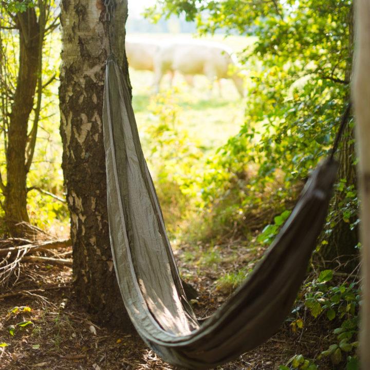 Hangmat tussen bomen en koeien in de wei