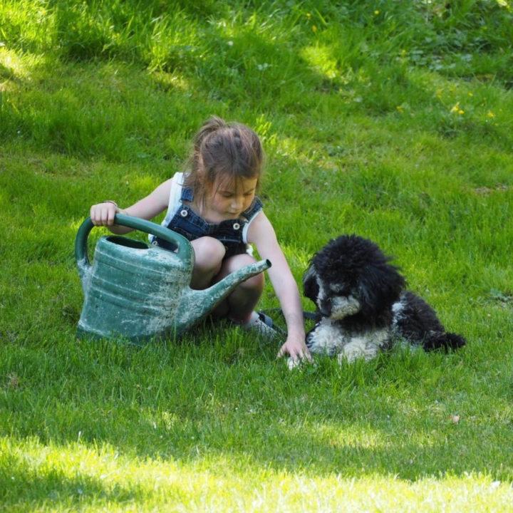 Meisje speelt in het gras met hondje ernaast