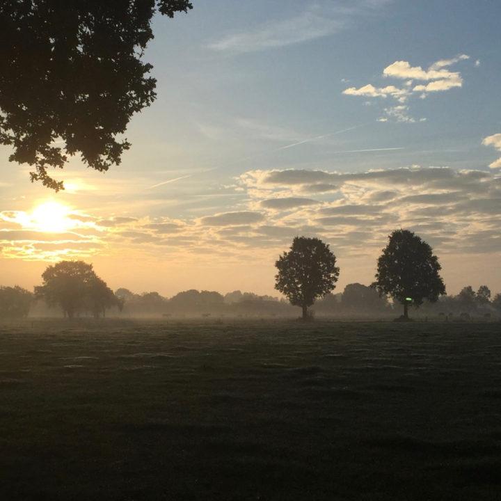 Uitzicht over de weilanden bij zonsopgang