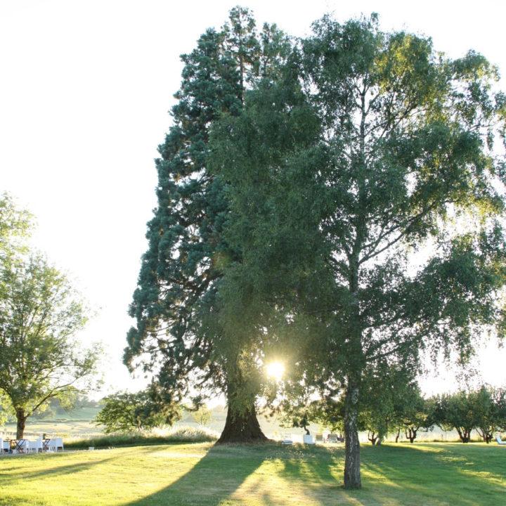 Grote boom waardoor de zon schijnt