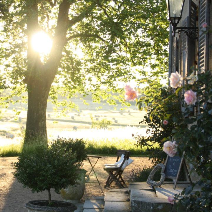 Avondlicht tussen de bomen door, met een terrasje en rozen langs de gevel