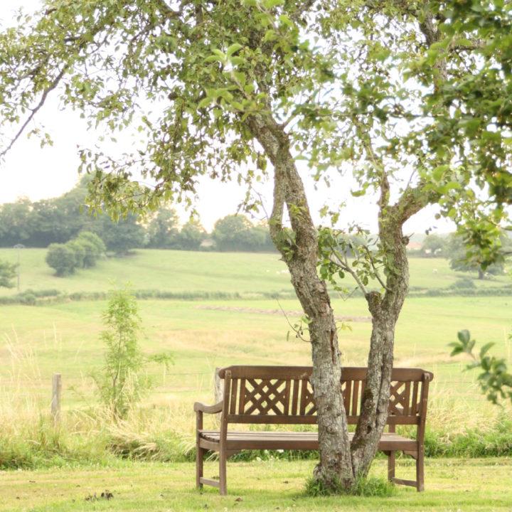 Een bankje onder een boom met zicht over de groene heuvels