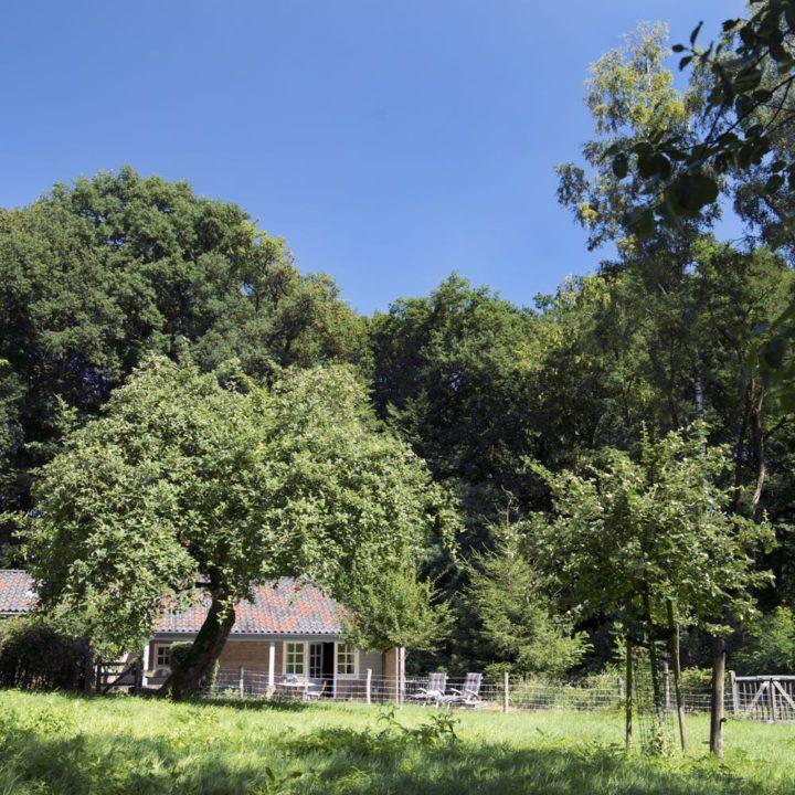 Vakantiehuisjes in het bos in Berg en Dal