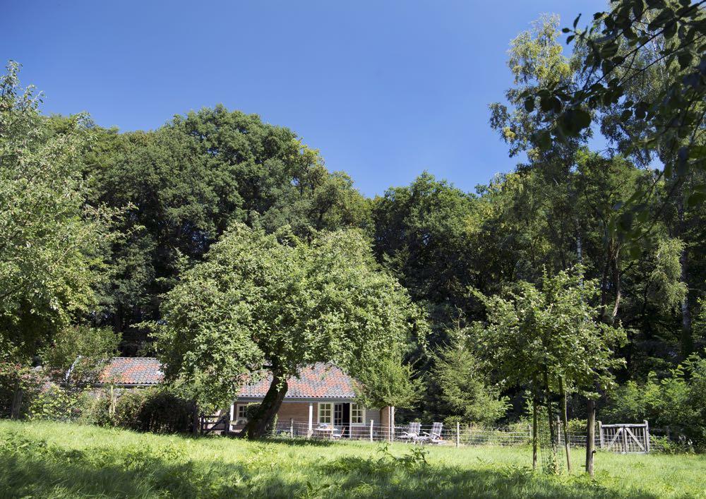 Een huisje in het bos, met ligstoelen in het gras voor de openslaande deuren.