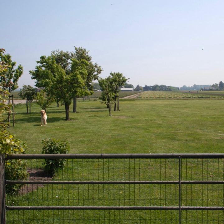 Hek met groot grasveld met hond erop