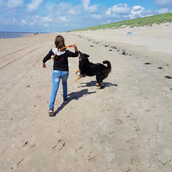 Meisje speelt met hond op het strand