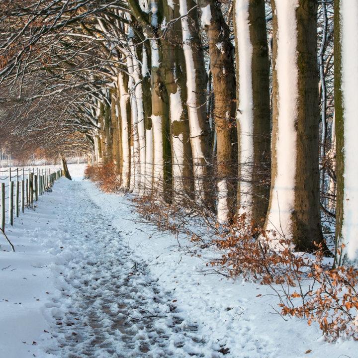 Wandelpad en bomen bedekt met laagje sneeuw
