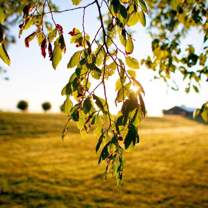 Groene bladeren met zonnestralen