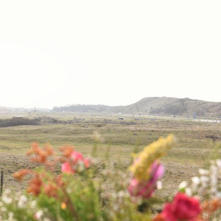 Bloemen met zicht op de duinen