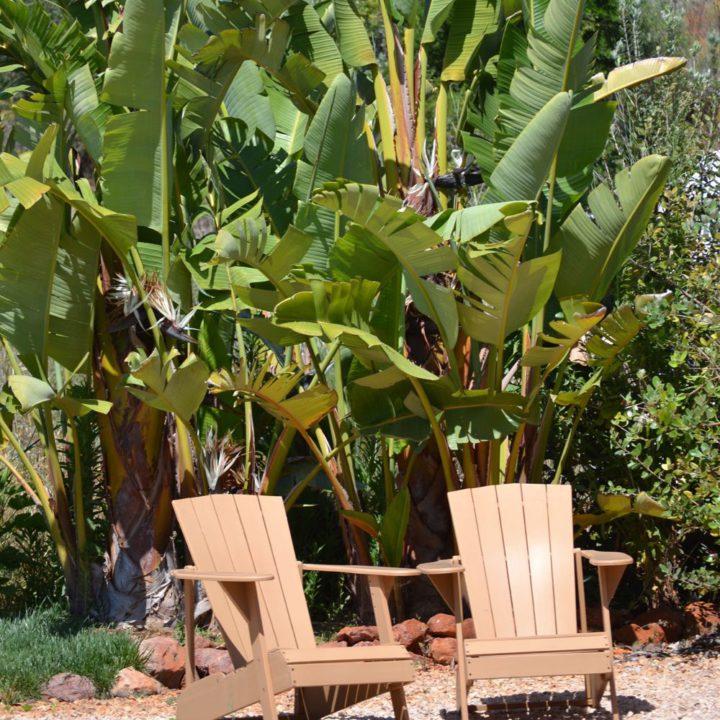 Twee houten beach chairs voor bananenbomen