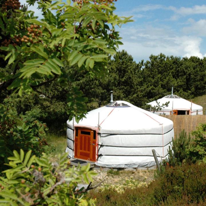 Twee witte Mongoolse yurts in het groen op Texel
