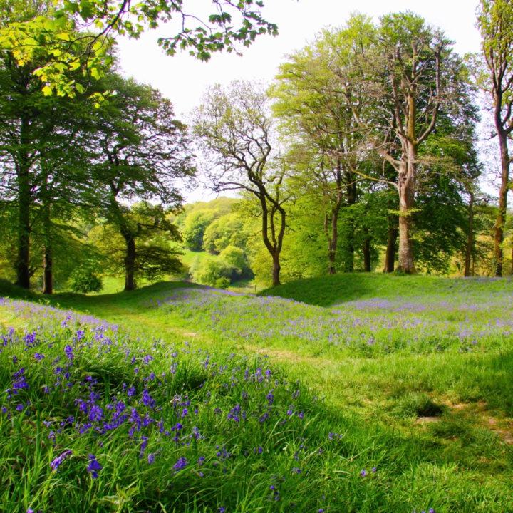 Een zonnig gras veld met bloemetjes en bomen