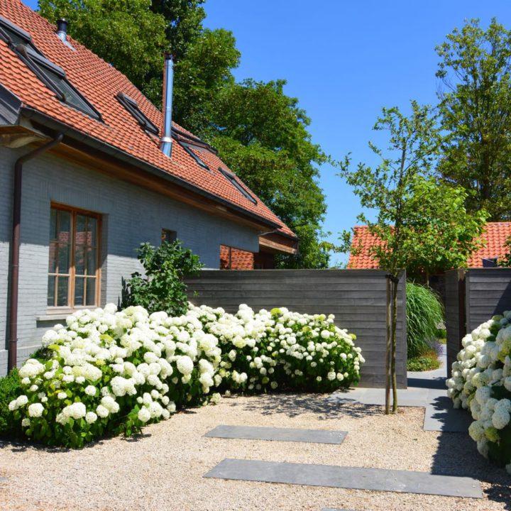 Hortensia's in de tuin van een vakantiehuis