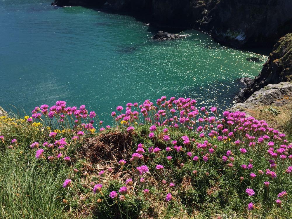 Bloemenzee in Noord-Ierland