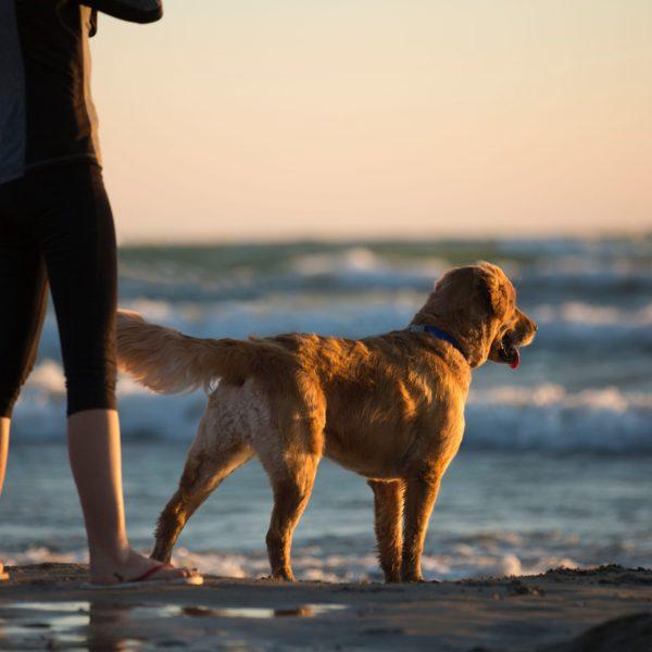 Strandwandeling met je hond