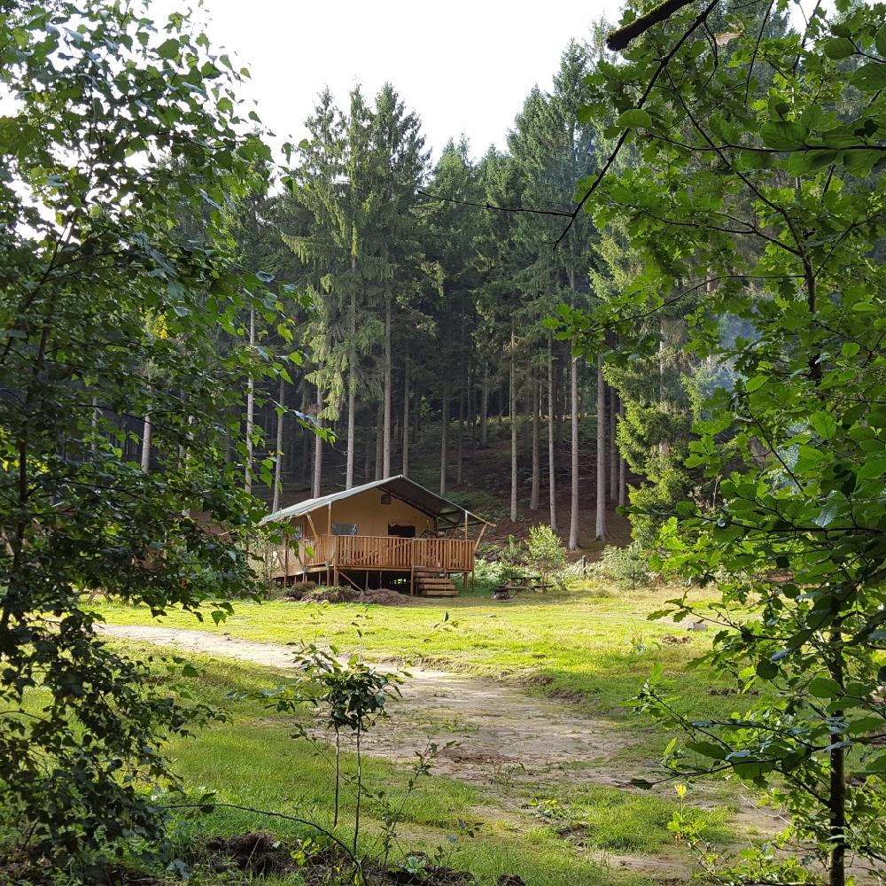 Safaritent in het bos aan de rand van de Veluwe