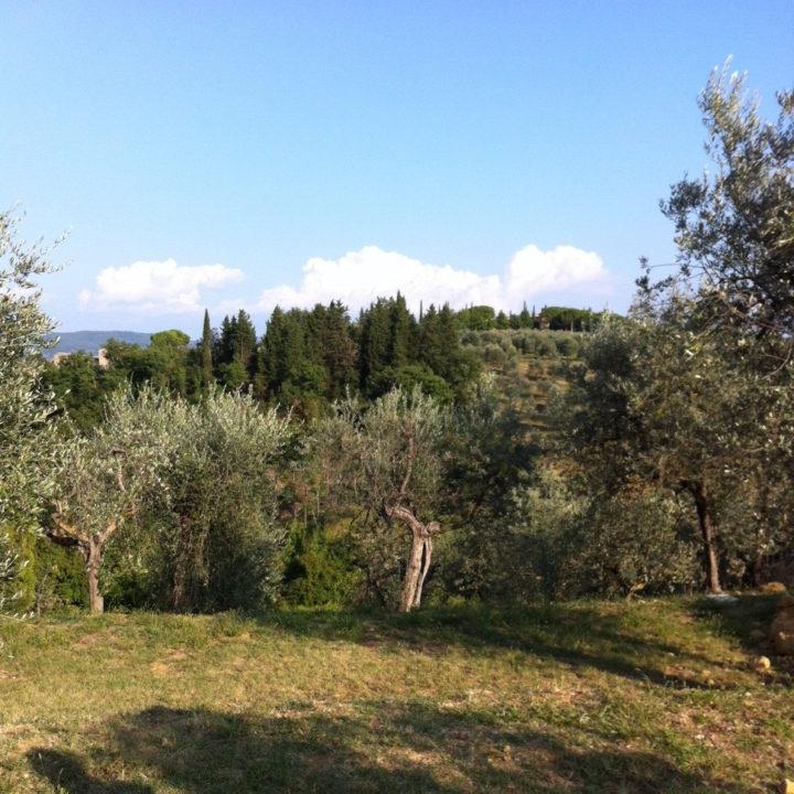 Glooiende heuvels met olijfbomen