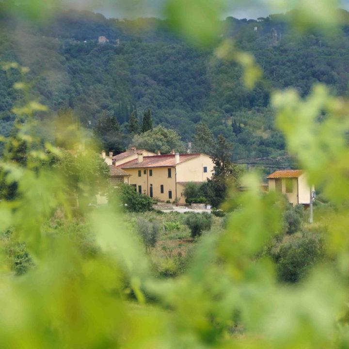 Zicht op vakantiehuizen in de groene heuvels van Toscane