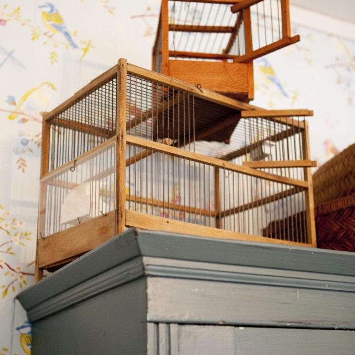 Stapel vogelkooitjes op een kast