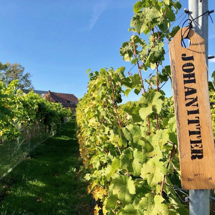 Wijnranken met een houten bordje met daarop de druivensoort