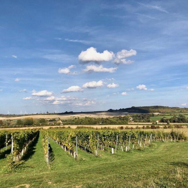 Uitzicht vanaf het logement over de wijnranken tot aan Duitsland