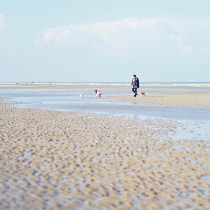 Strand bij eb met wandelaar met hond