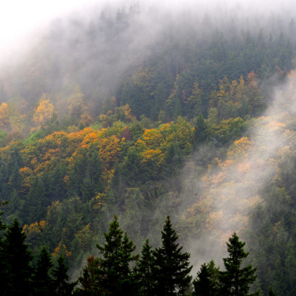 Nevel en wolken boven de (gekleurde) bomen