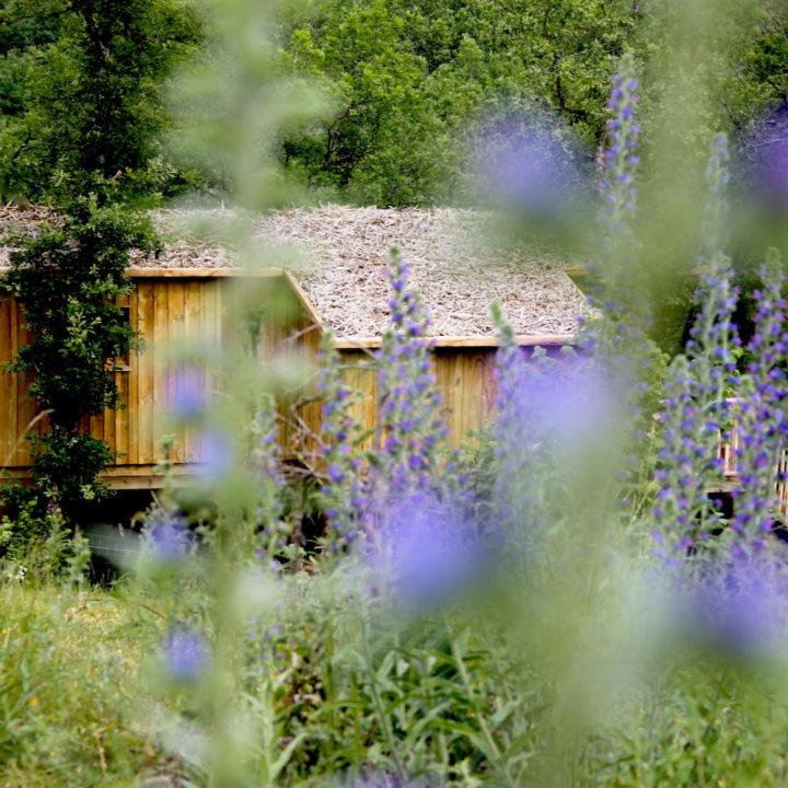 Boomhut tussen de blauwe bloemen