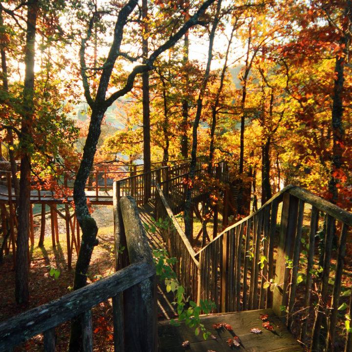 Zonlicht door de herfstbladeren bij een boomhut