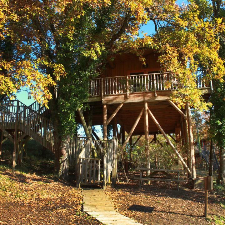 Boomhut tussen de herfstbladeren