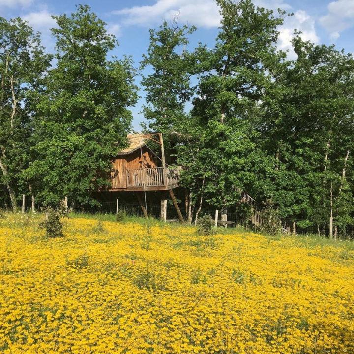 Boomhut met gele bloemetjes in het gras ervoor