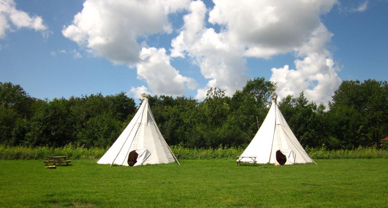 Twee witte tipi's in een weiland, op een bijzondere camping in Nederland
