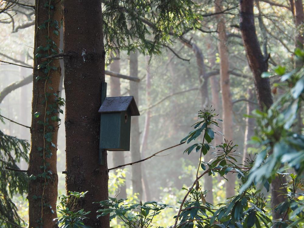 Ochtendlicht door de bomen, met nevel en een vogelhuisje in de boom
