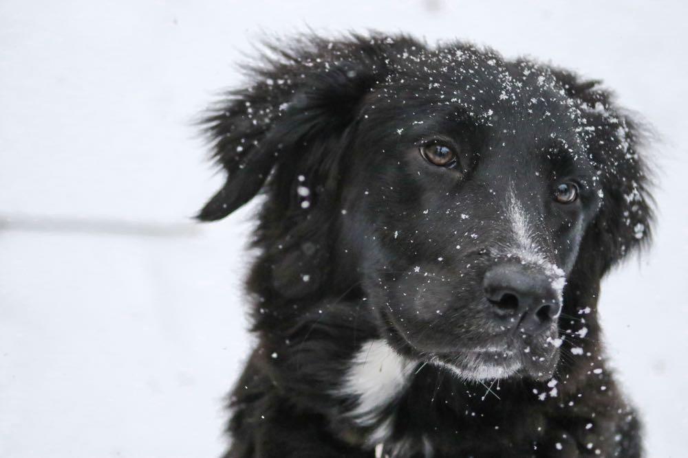 Weekendje weg met je hond, samen spelen in de sneeuw