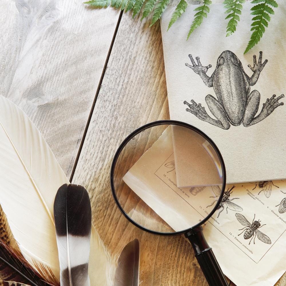 Een vergrootglas, tekening van een kikker en libelle en een veer