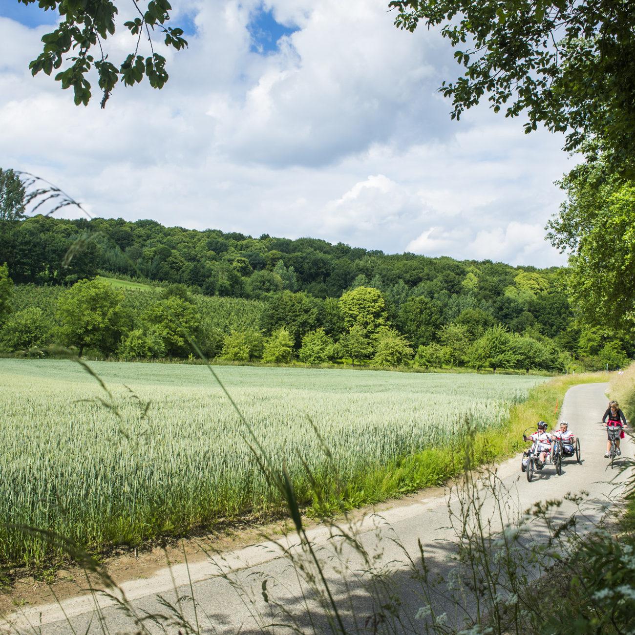 Tijdens een vakantie België fietsen over een landweg in Hageland. Langs maisvelden en door bossen.