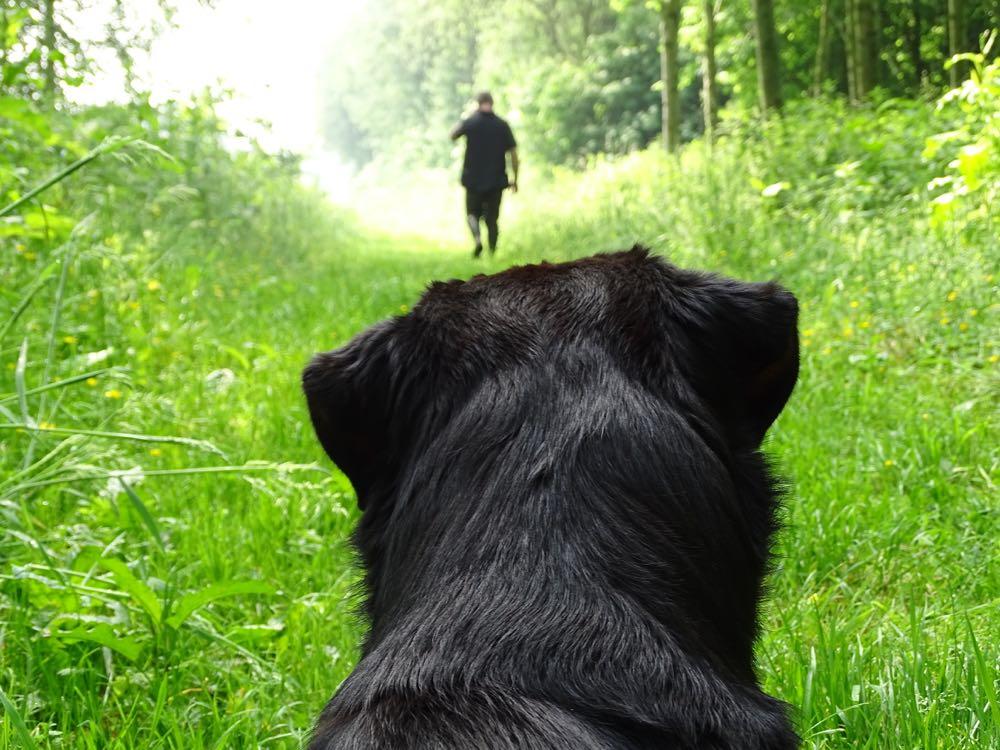 Huur een huisje voor je hond in een bosrijke omgeving. Een zwarte hond kijkt naar zijn wandelende baasje