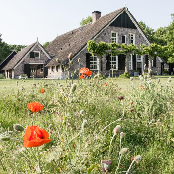 De monumentale boerderij aan de brink in Rheeze waar het theehuis en het gastenverblijf gevestigd zijn.