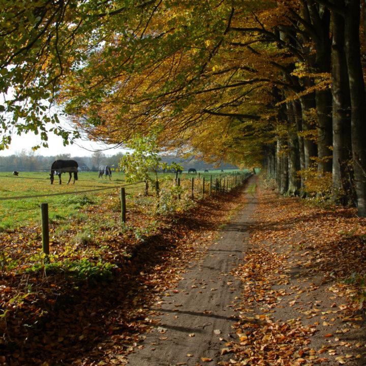 Een wandelpad onder de gekleurde bomen en een paard in de wei