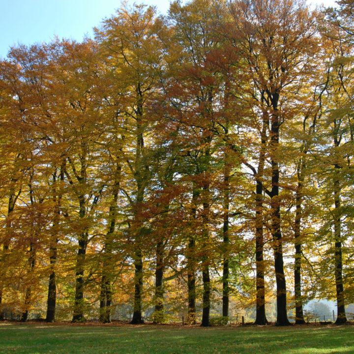 Uitzicht vanuit Buitenhuisje Berg en Dal, in de herfst met een lange rij bomen met gekleurde bladeren