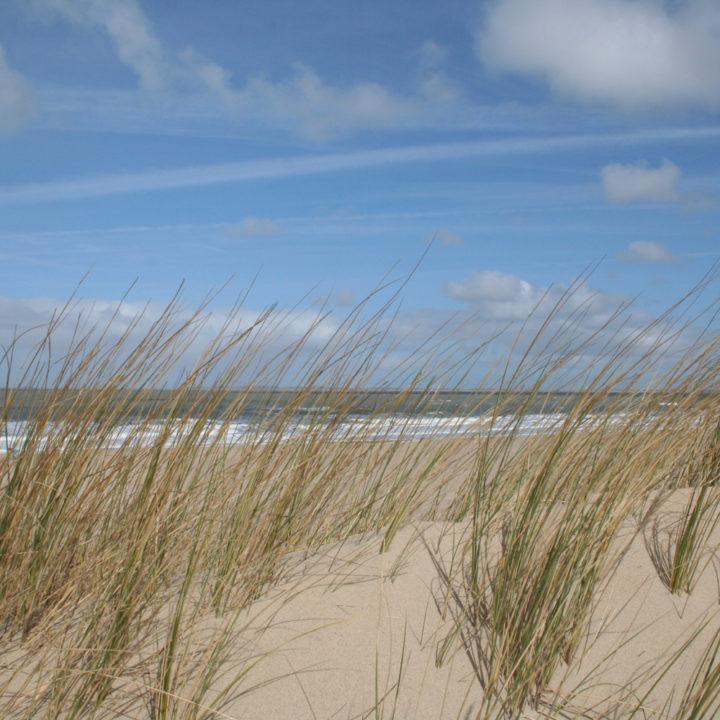 Wuivend helmgras op het strand in Zeeland