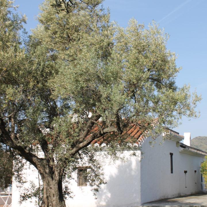 Een oude wijnboerderij is omgetoverd tot vakantiewoning.