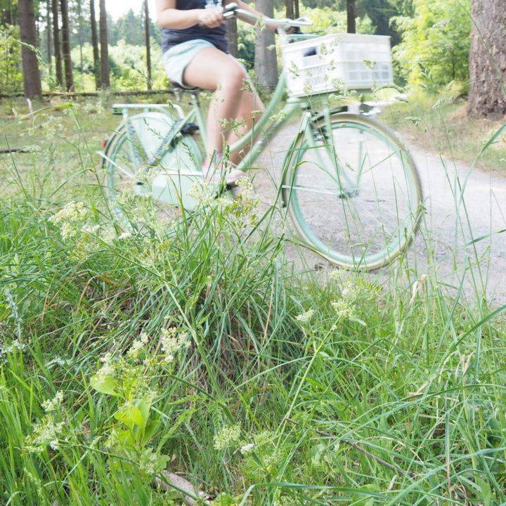 Gras met bloemen en de mintgroene fiets op een schelpenpad in het bos.