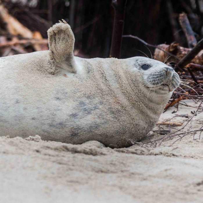 Een excursie naar de zeehonden tijdens je vakantie op Terschelling.