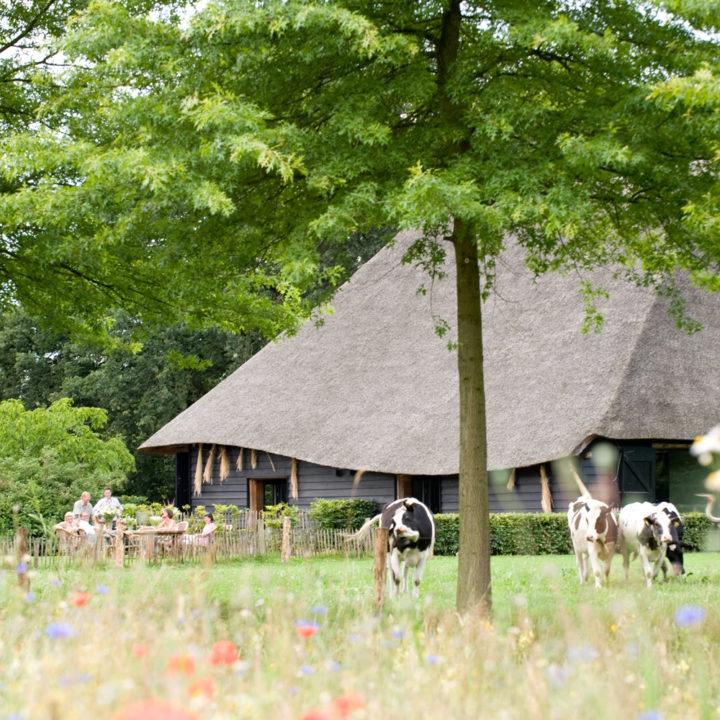 Brabantse schuur verbouwd tot luxe en grote accommodatie
