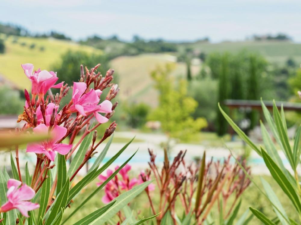 Vakantiehuis met zwembad, tussen de roze oleanders