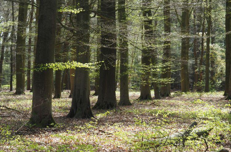 Bossen met fris groen blad in Soest