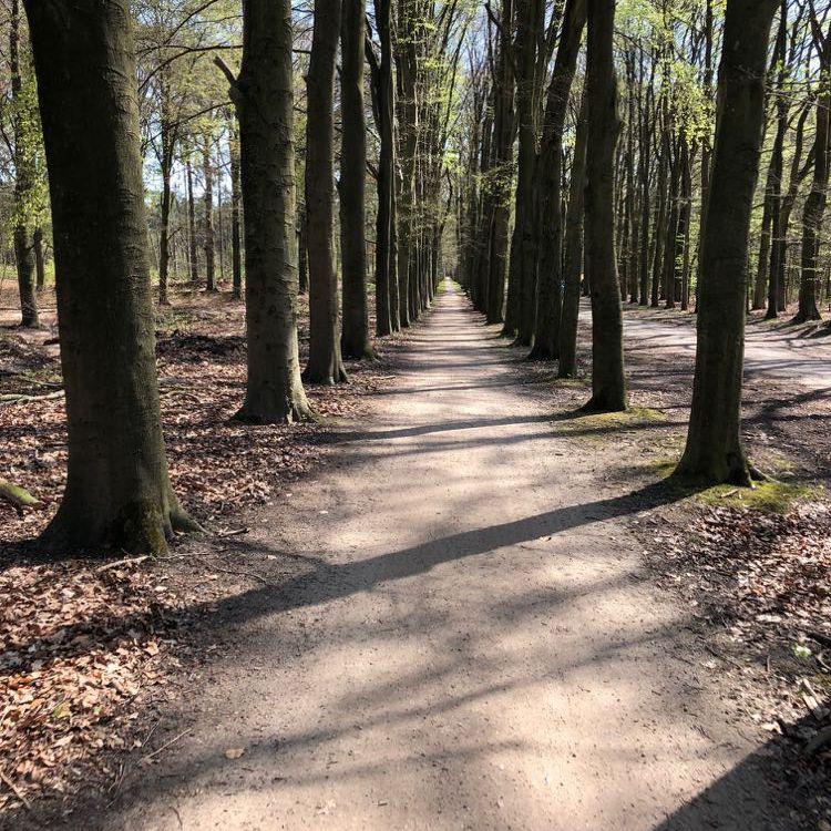 Fietspaden in de bossen van Soest