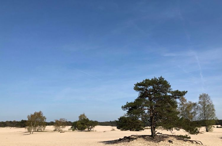 Zandvlakte Soesterduinen