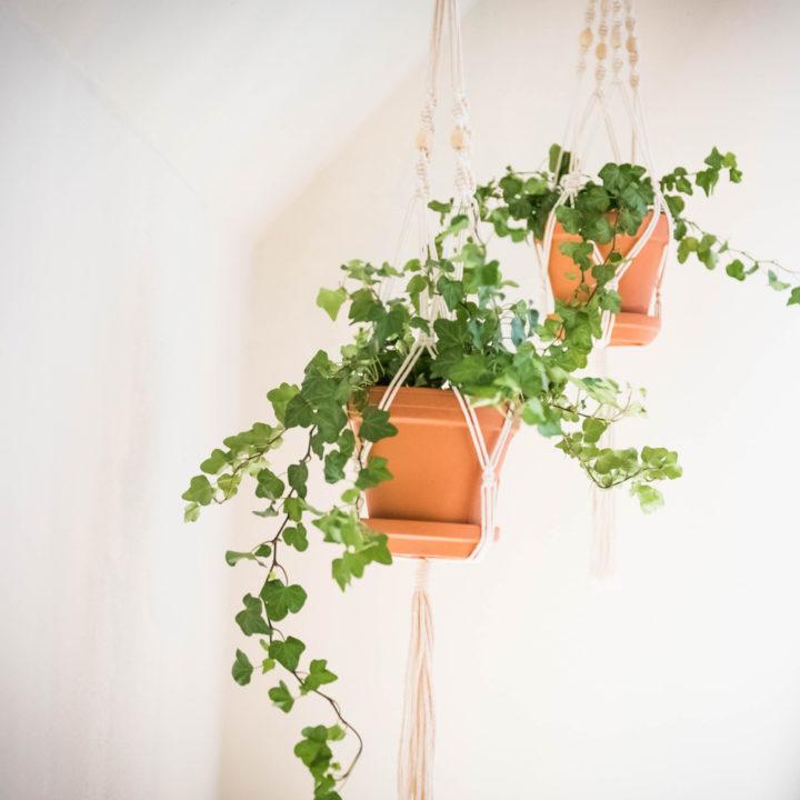 Potten met planten aan het plafond